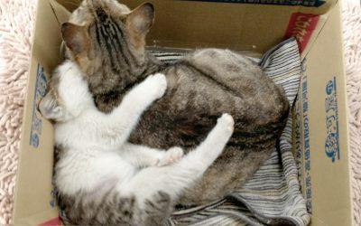 どんな子にも母猫がいました。