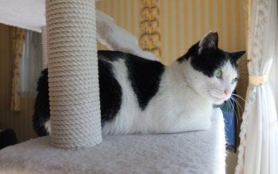 ねこ藩城下の猫たち:⑥トントン、室内に入る。