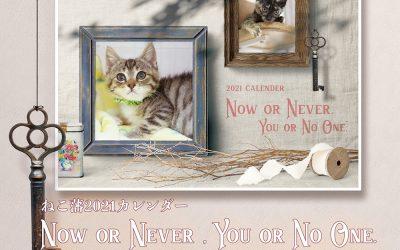 2021年度カレンダー:登場する猫たち