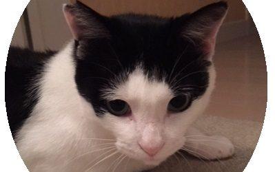 ねこ藩城下の猫たち:⑦トントンは悪くない。