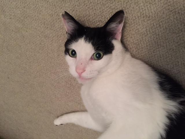 ねこ藩城下の猫たち:⑧トントンを知る(1)。