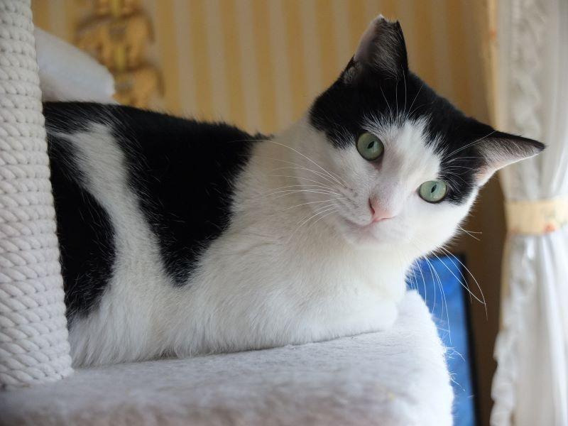 ねこ藩城下の猫たち:(11)ふつうのねこ。