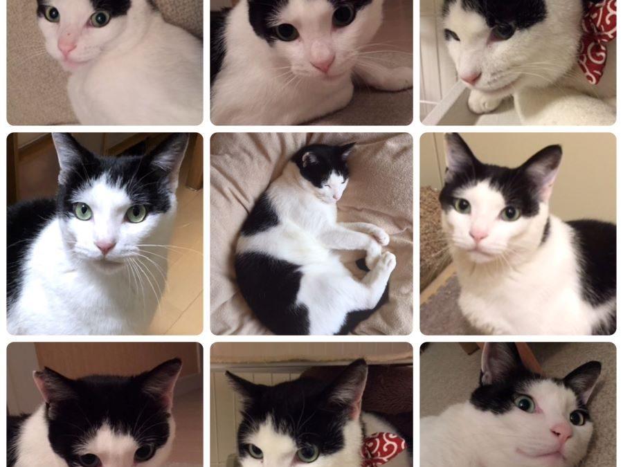 ねこ藩城下の猫たち:(12)かわいい子には…。