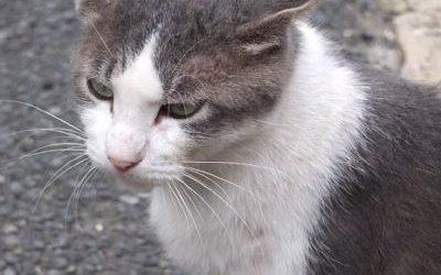 ねこ藩城下の猫たち :(13)ポッちゃんのいない庭(1)。