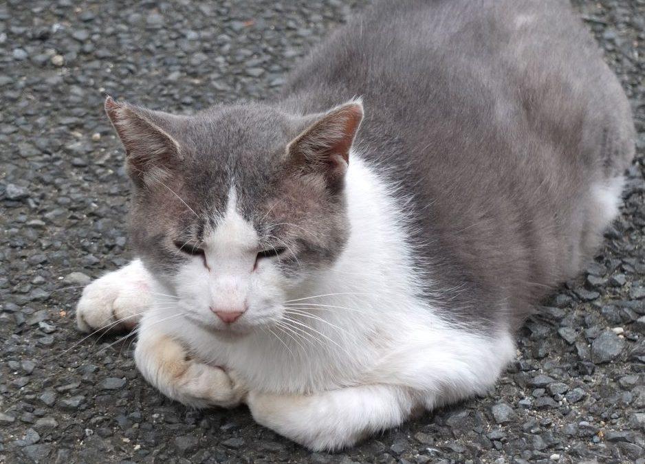 ねこ藩城下の猫たち:(15)ポッちゃんのいない庭(3)。