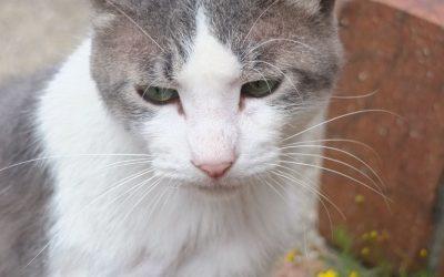 ねこ藩城下の猫たち  :(16)ポッちゃんのいない庭(4)~完。